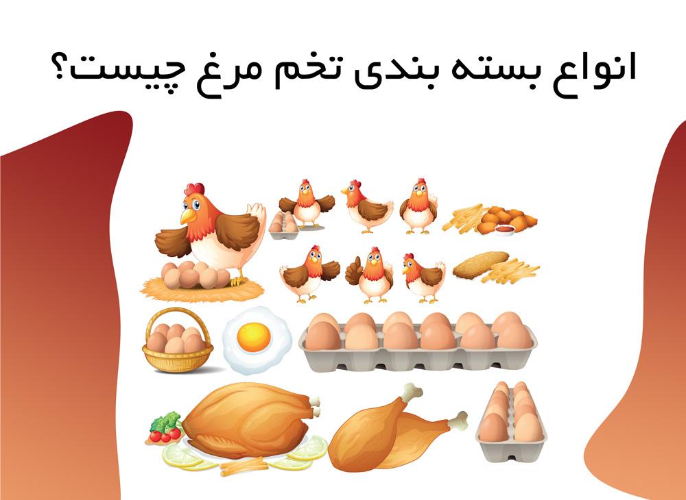 انواع بسته بندی تخم مرغ چیست؟