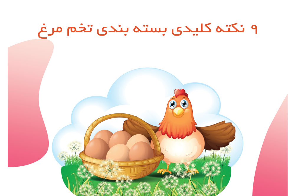 بسته بندی تخم مرغ